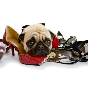 Shoes, socks, entire sofas – it seems there's no limit to what a puppy will chew. Here are some great tips on curbing your puppy's bad chewing habit.