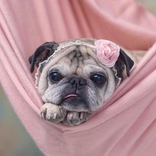 Pink puggette