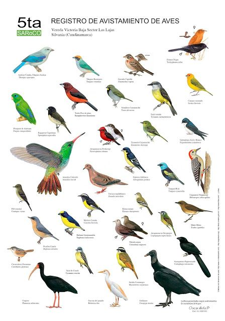 Avistamiento de Aves: Avistamientos de Aves en Silvanìa (Cundinamarca - ...