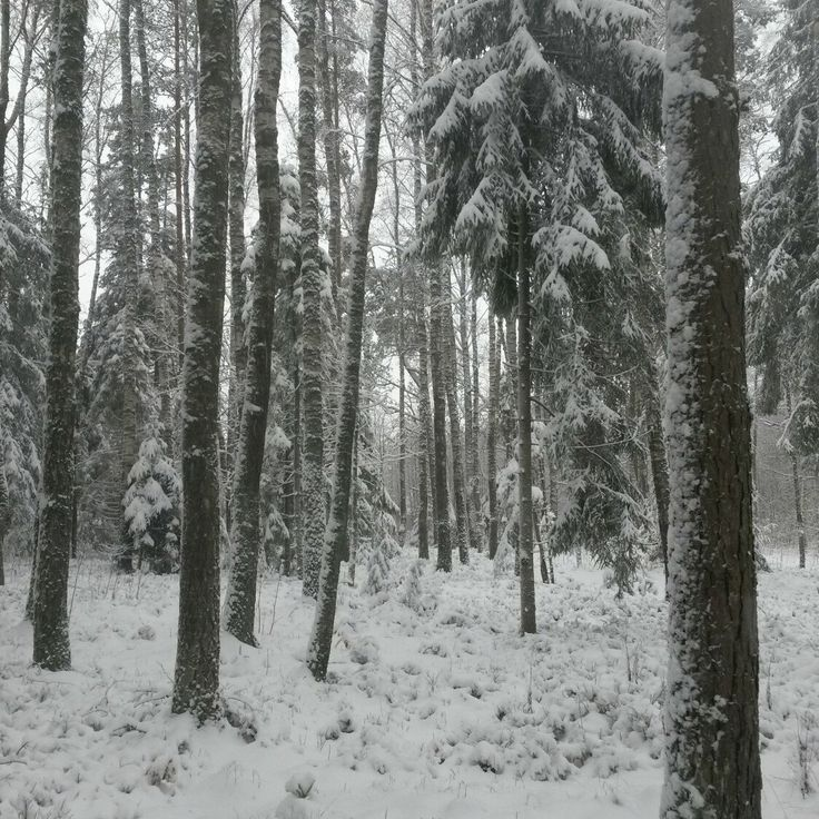 First snow today! And it's still snowing! #movinglines_art Click the photo!