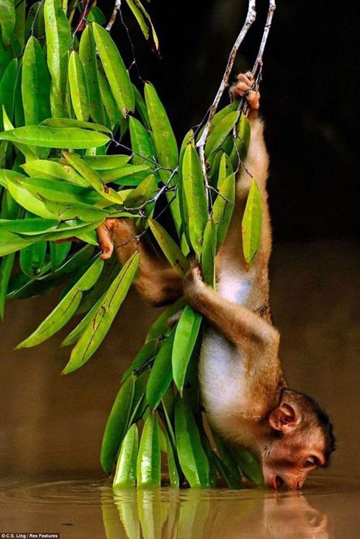 Mejores 422 imágenes de Primates and Monkeys of the World en ...