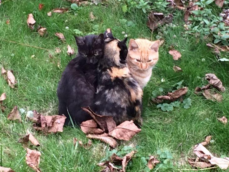 Trei frați pătați