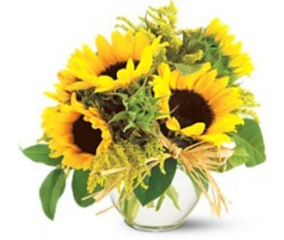Google Image Result for https://www.4165flower.com/files/products/products/sassy%2520sunflowers2-full.jpg