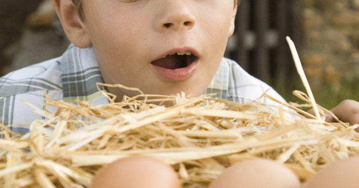 Planos de construção para uma caixa de ninho para galinhas. Se você mantém galinhas em casa, fazer uma caixa de ninho para elas pode aumentar drasticamente a produção de ovos. As galinhas podem desenvolver o hábito de comer os próprios ovos, ou podem não se sentir confortáveis ao botar ovos em espaços expostos e desprotegidos. Fazer uma caixa de ninho para elas é relativamente simples e ajuda a reduzir ...