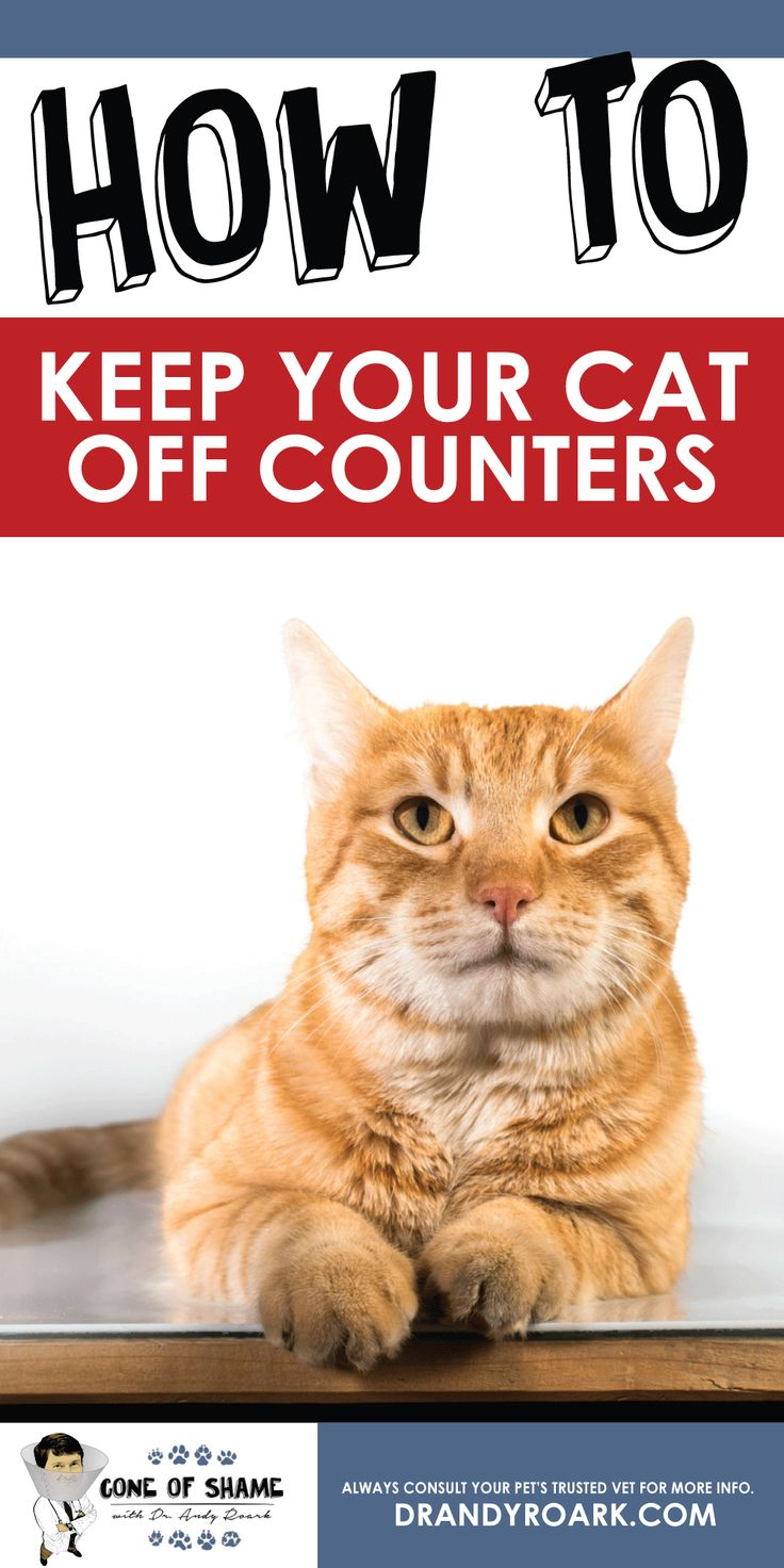 Keep Cats Off Counters: Tips From Dr. I Thought He Was Our Friend.