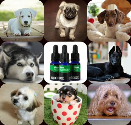 End Date: 03/31/2018; Eligibility: US Enter this #sweepstakes to #win the Grand Prize which is a selection of BioRemediesMD's new line of Pet CBD oil and treats (estimated retail value – $100.00).