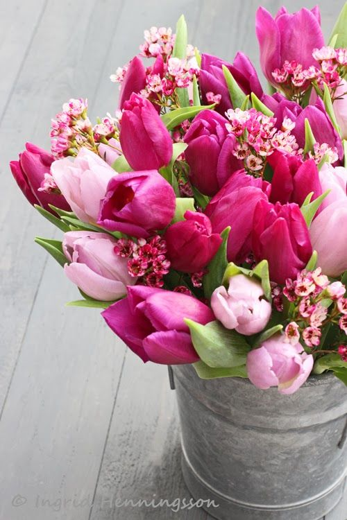 Pink tulips and waxflowers - ingrid & titti - Tulips. © Of Spring and Summer.