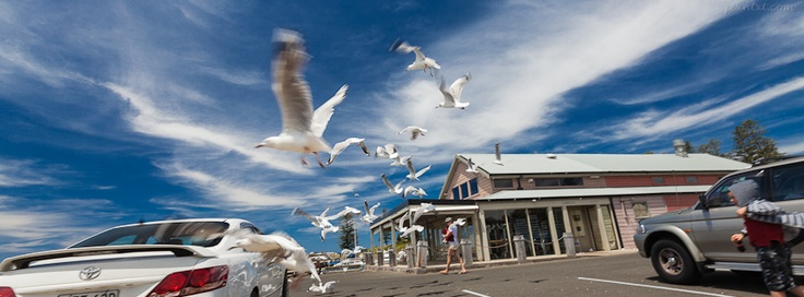 Chasing gulls, Australia - If you use this image, please post a link to your Facebook page in the comments and/or Like my page at www.facebook.com/pixntxt - You can check out my reasons for releasing these covers under Creative Commons at my blog: http://blog.pixntxt.com/2012/10/01/what-would-trey-ratcliff-do-post-free-facebook-timeline-images-thats-what/