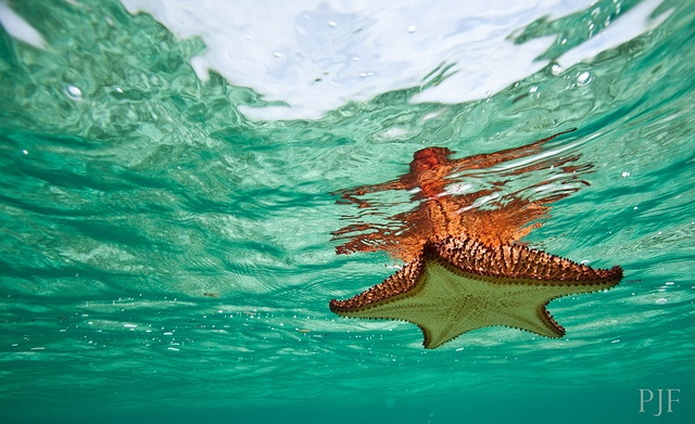 Caribbean Sea Creatures: The Isles Of June Images On