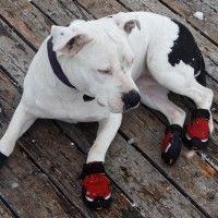 #dogalize Scarpe per cani: caratteristiche e modelli #dogs #cats #pets