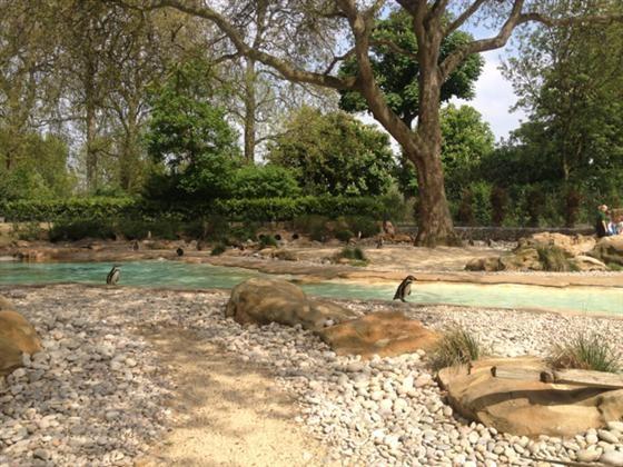 London Zoo Penguin Pool