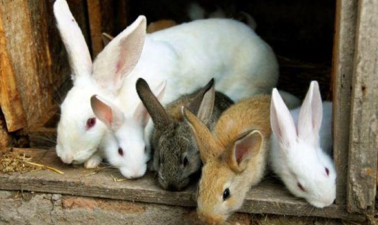 Te lo contamos todo sobre la conjuntivitis en conejos
