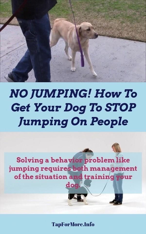 Stop Dog Jumping And Dog Training Tips Lay Down Check The Pic