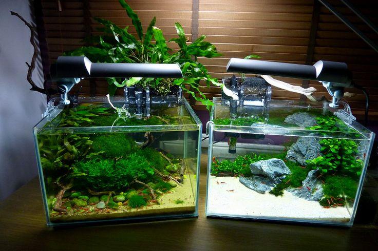The planted aquarium store workshop nano tank aquascaping for Plante nano aquarium