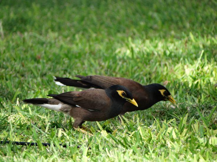 birds, Mauritius
