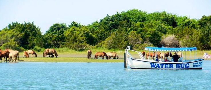 Mystery Boat Tours Beaufort Nc