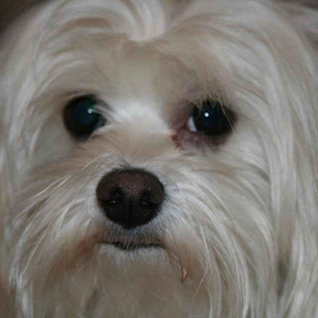 The Ingredients for Natural Tear Stain Remover for Dogs | eHow | eHow