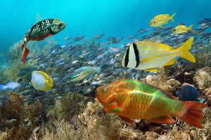 Southern Caribbean: Top 10 Places to Snorkel & Dive - Cruises - Cruise Critic
