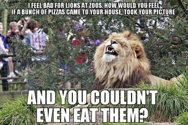 funny lion meme