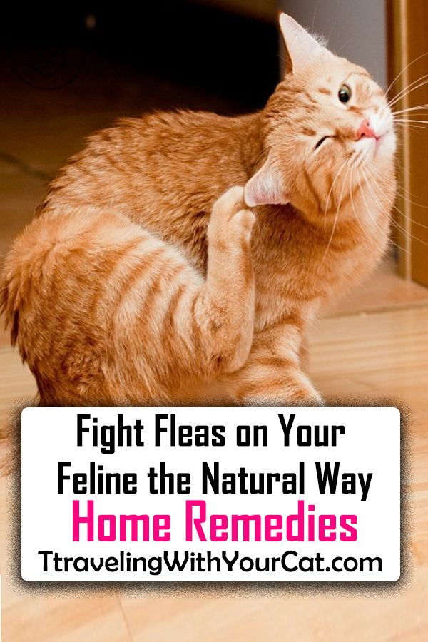 Fight Fleas On Your Feline The Natural Way Home Remedies Home Remedies For Fleas Fleas Cat Fleas