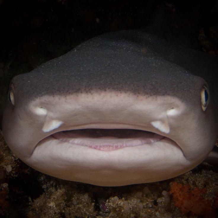 I think she is smiling isn't she?  #shark
