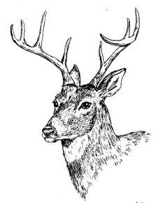 pen and ink moose - Google Search