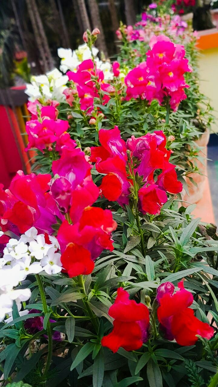 Pin By Sudeshna Mondal On Amature Photography Floral Plants