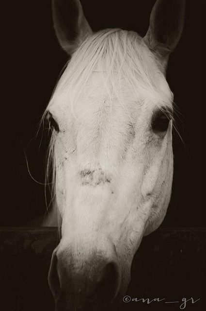 a white horse   Flickr - Photo Sharing!