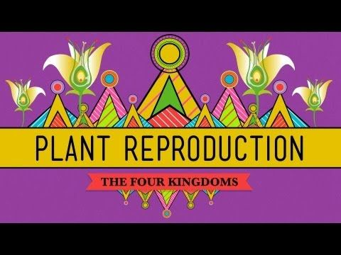 The Plants & The Bees: Plant Reproduction - CrashCourse Biology #38