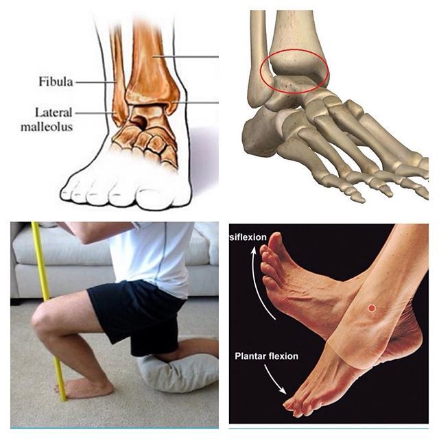 WEBSTA @ thefootcollective - The ankle series part 1: The talocrural joint👣👣👣The talocrural joint is sometimes referred to as 'the ankle joint proper', and it is usually what comes to mind when people are discussing ankle mobility etc. The joint is located where the tibia and fibula (bones of the lower leg) meet the talus (bone in the foot). The lateral and medial malleolus are the bony prominences at both sides of the ankle, and are actually the ends of the fibula and tibia…