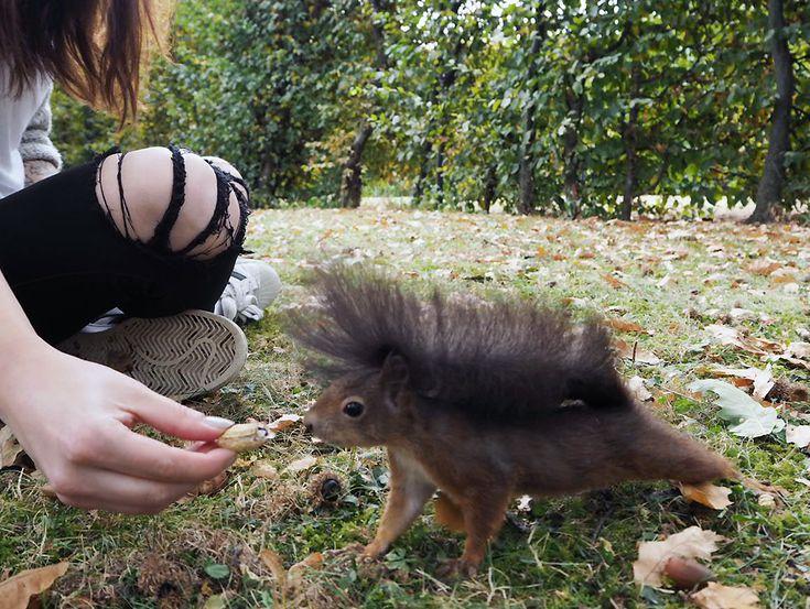 Eichhörnchen füttern Schönbrunn Tipps Wien