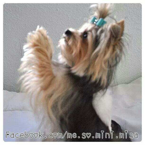 Misa Minnie ♥ I love this dog.