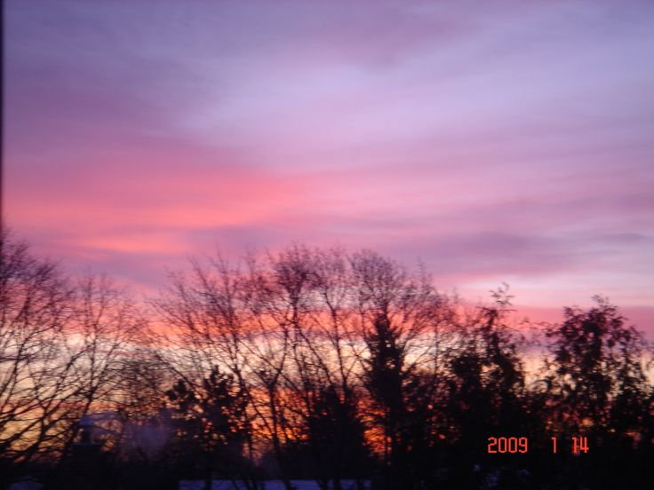 Winter pink mauve sky photo by Svetlana