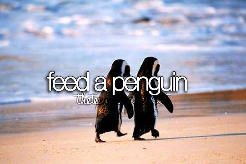Feed a penguin #Bucket List (I've already fed a sloth!)