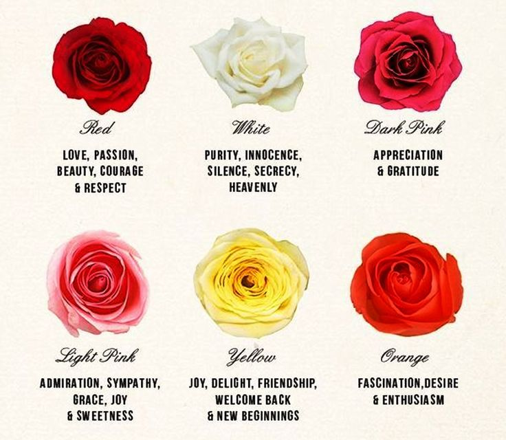Best 25 rose color meanings ideas on pinterest for What color is the friendship rose