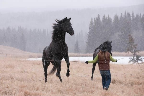 liberty horse training via Heartland... awesome bonds between horse and owner