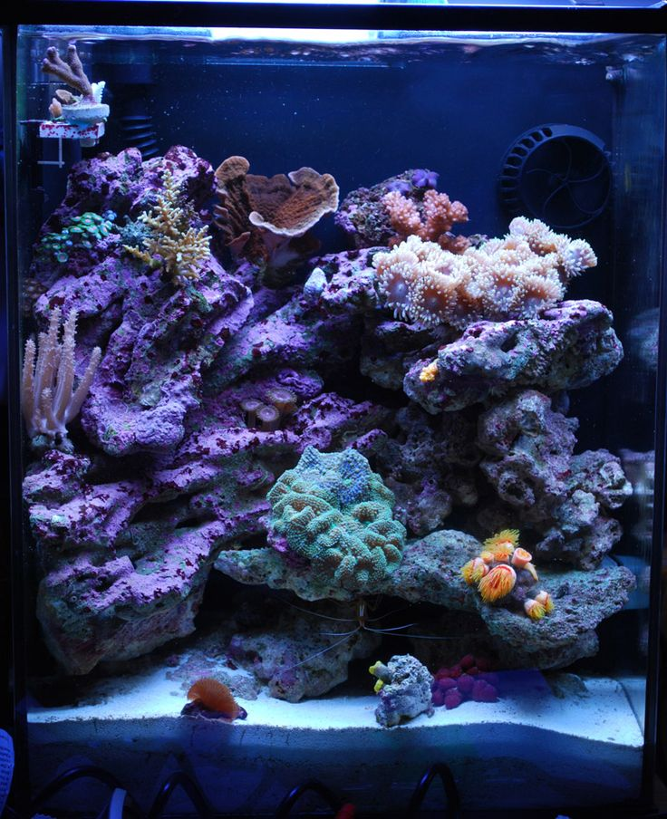 49 best nano reef aquascaping images on pinterest fish for Nano saltwater fish