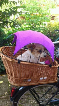Bike basket for dogs. Found image on fbook page Chio & Co. – More at http://www.GlobeTransformer.org