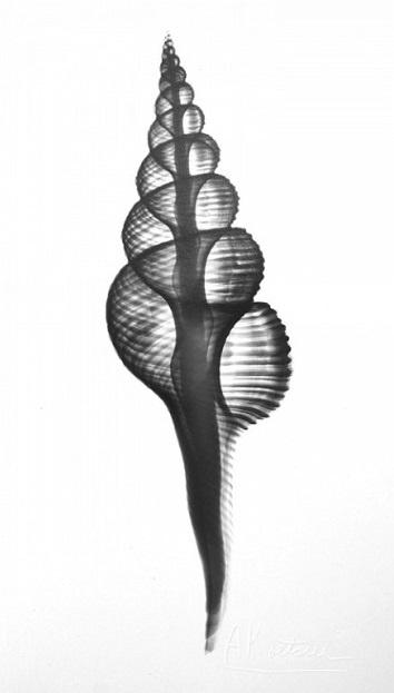 LIFE IS A SPIRAL - Shell by Albert Koetsier