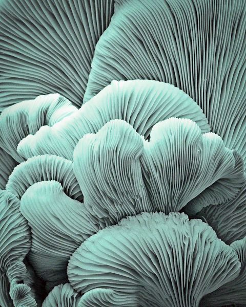 in this image the photographer has used a macro lens to capture the detail and texture in the coral, there isn't a lot of color in it so that takes away some of the distraction so we focus more on the lines and imagine what it would feel like to touch it and feel it, which creates a lot more of interest in  it. it gets the viewers senses flowing