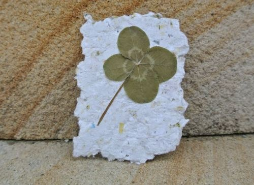real 4 leaf clover / gift / genuine / good luck / st patricks day