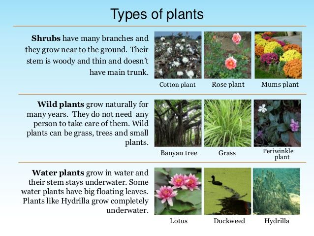 Image Result For Kinds Of Plants With Pictures And Names Plants Wild Plants Planting Mums