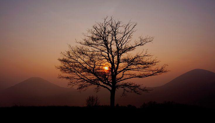 Un albero sullo sfondo dei Colli Euganei