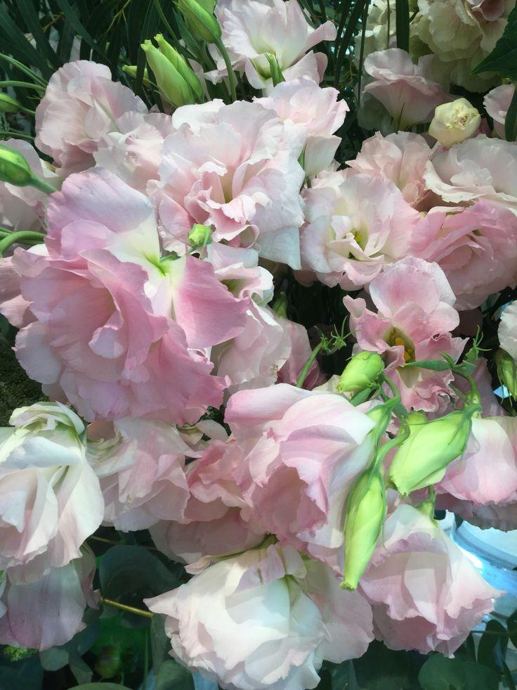9 best fleurs de saison : septembre images on pinterest | flowers