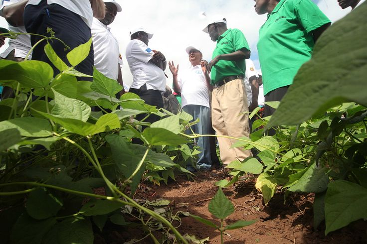 Husband and wife farmers Peter Waziweyi and Elizabeth Sikoya (green shirts) giving a tour of their maize and bean crops to FAO delegates in Catandica, Mozambique. ©FAO/Paballo Thekiso