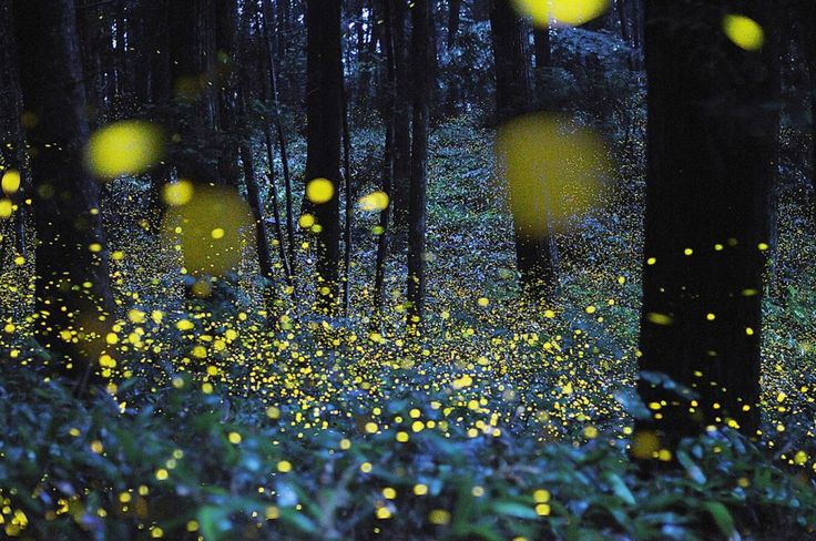 Che la luce di una lucciola nel buio della notte sappia creare un'atmosfera magica è cosa nota, a dimostrare invece che una miriade di questi puntini luminescenti possa creare una vera e propria poesia per gli occhi ci ha pensato Hiramatsu Tsuneaki. Addentrandosi nei boschi giapponesi, il fot