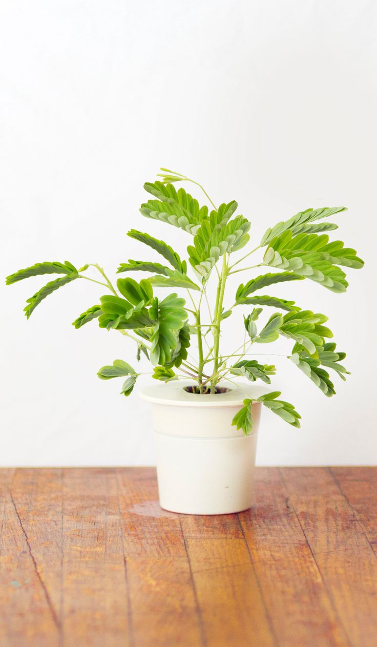 A moving plant for Smart Herb Garden - finally! Ladies and gentlemen -  click and