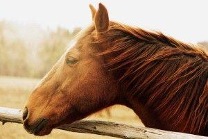 Photo Horse HD Wallpaper