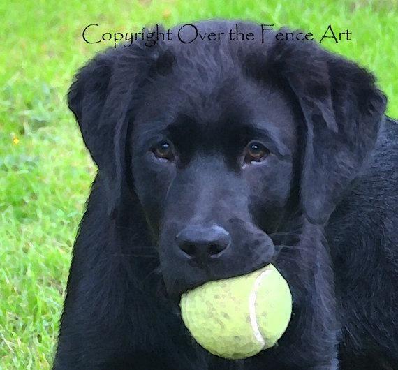 Dog Card Black Labrador Puppy With Tennis Ball Fine Art Photo Labradorpuppies Mit Bildern Hunde Tierbilder Familienhund