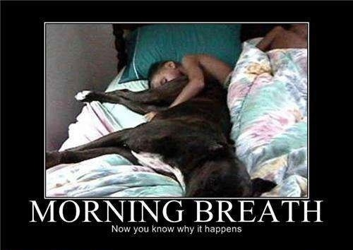 Morning Breath - Why You Shouldn't Sleep With Your PetsFunny Pets, Real Life, Laugh, Funny Dogs, Funny Animal Pictures, Funny Pictures, Funny Stuff, Mornings Breath, Pets Humor